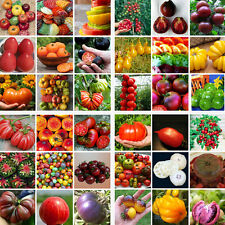 200PC Rare Mixed Tomato Seeds Ornamental Potted Vegetable Fruit Seed Home Garden