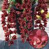 100 Pcs Cymbidium Seeds Climbing Orchid Flower Garden Potted Ornament Vividly