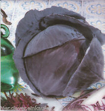 Salteada pigmeo Brassica oleracea capitata rubra aprox. 200 Korn/Seeds