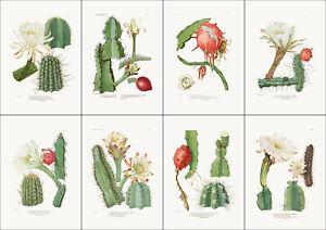 Set of 8 Botanical cactus prints A4 unframed