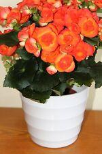 Quality Small White Rigid Plastic Plant Pot Cover -Contempory Ridged Design