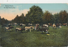 C6887 1910 POSTCARD COWS DAIRY FARM IN KY KENTUCKY