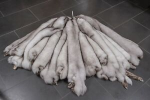 5309 Natural Blue Foxes Skins Real Fur | Naturelle Blaufüchse Felle Blaufuchs