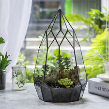 NCYP Irregular Open Geometric Glass Terrarium Tall Teardrop Succulents Planter