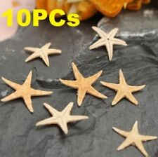 10PCs Mini Natural Starfish Shell Beach Sea Star Landscape Crafts Making Decor