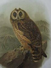 c1880 PRINT KEULEMANS MADAGASCAR ~ CAPE EAGLE OWL ~