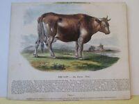 Vintage Print,COW,Society Christian Knowledge,c1857