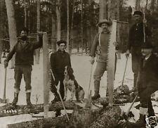 Huge Logging Cross Cut Saws Axes Lumberjacks and Logging Dog Kalkaska Michigan