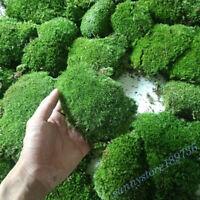 Micro Landscape Green Moss Live Plant Aquarium Fish Tank Ornament Supplies