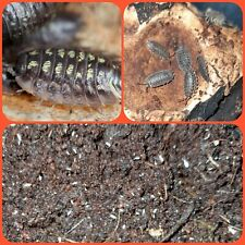 Instant Bio Active Clean Up Crew ( Isopods And Springtails) For Reptiles,...