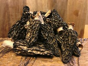 55g Dried Delicious Huge Morel Mushrooms From Sibiria (Morchella Conica)-AAA+