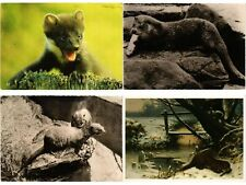 LOUTRE, LOUTRES , OTTER, ANIMAUX 47 MODERN CP