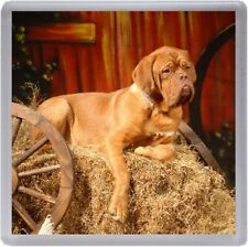 Dogue de Bordeaux Coaster No 3 by Starprint