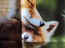 1 Dekokissen Kissenhülle Fuchs 50x50 cm braun grün Reißverschluß 100% Polyester