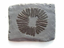 FOSSILS REPLICA Cambrian Predator Anomalocaris MOUTH Burgess Shale