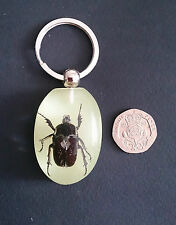 Genuine Insect in Resin Keyring. Halloween or Christmas Gift