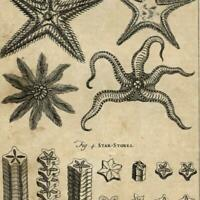 Star Fish & Star symbols 1754 Thomas Jefferys scarce old engraved print