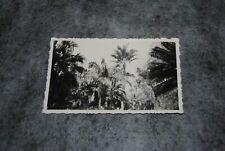 (ETA) photo vintage 1930- 1939 brésil jardin botanique de rio