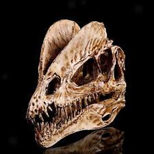 Modèle Crâne Fossile en Résine Dinosaure Dilophosaurus 1/3 Echelle