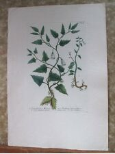 "Vintage Engraving,CONVOLVULIS MEXICA,1740,WEINMANN,Botanical,20x13.5"",Mezzotint"