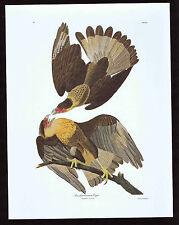 Brasilian Caracara Eagle - Crested Caracara- Audubon Color Bird Print