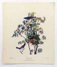 Original JOHN JAMES AUDUBON Blue Grosbeak Birds Natural History Lithograph #Z136