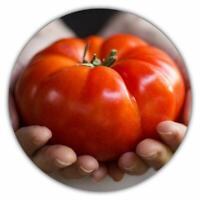Riesen Tomaten - roter saftiger Riese (50 Samen)