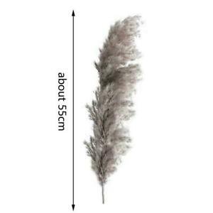 Gray Natural Dried Pampas Grass Reed Flowers Bunch Bouquet Party Home Decor J7O4