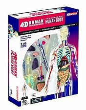 4D Master Human Body Model Kit Vision Transparent 13""