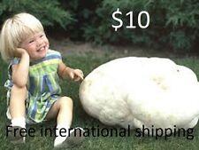 Giant Puffball Calvatia gigantea Real naturall mushrooms seeds spores $9.90