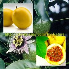 100 Seeds Yellow Passion Fruit, Edulis Passiflora, Seeds from Thailand.