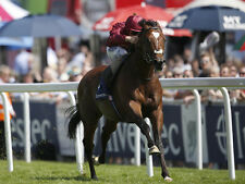 Horse Racing One Winner a Day and Banker and True Class Betting Systems