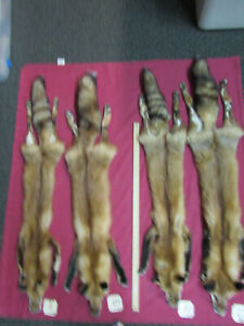 tanned red fox with feet,animal hide, craft, art, decoration #10, & 11 left.
