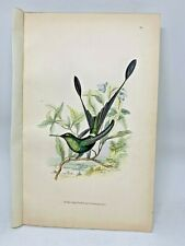DELUXE ED Hand-colored Plates 1840 Jardine History Hummingbirds #22 Racket Tail