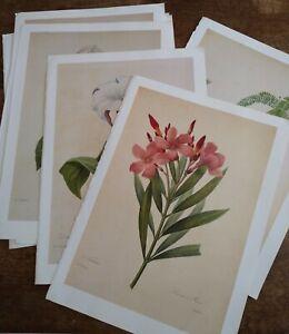 8 Redoute Botanical Prints Book Plates Sunflower, Jasmine, Gladiola, Rose & More