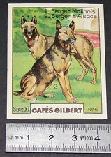 CHROMO 1936 CAFES GILBERT RACES DE CHIENS BERGER MALINOIS & D'ALSACE DOGS HUNDE