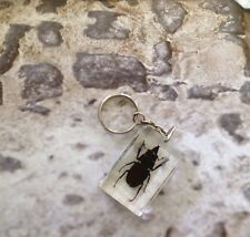 Entomology Taxidermy Insects Butterflies Vintage Industrial Decor Keyring
