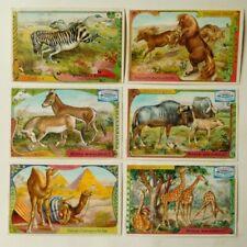 6 Kaufmannsbilder Serie 5332 Exotische Tiere