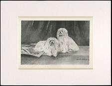 MALTESE DOGS RARE 1894 ANTIQUE DOG PRINT by ARTHUR WARDLE READY MOUNTED