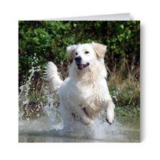 Golden Retriever Birthday Card - Dog