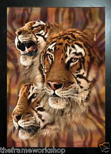 BLACK FRAMED TIGERS HEADS - 3D MOVING PICTURE 365mm X 465mm (NEW)