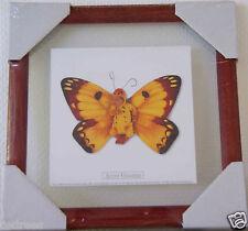 tableau cadre ANNE GEDDES photo bébé papillon 23cms neuf vitre verre decoration