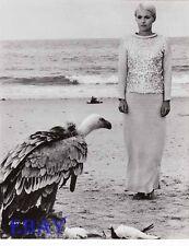 Jean Seberg Birds In Peru VINTAGE Photo