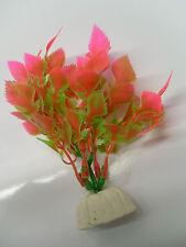 plante feuille dentelé