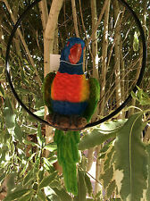 Lovely parrot (rainbow lorikeet) in a ring