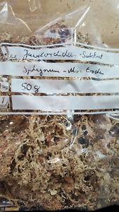Macodes substrate 50g trockenes Juwelorchideen-Moos / dried jewel orchid moss