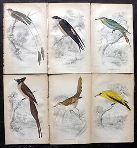 William Jardine C1840 Lot of 6 Hand Col Prints. Birds. Book Plates