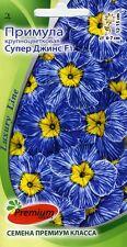 """Primula grandiflora """"Super Jeans F1"""""""