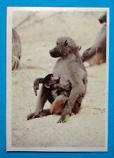 Figurina Panini-ANIMALI DI TUTTO IL MONDO 1965-n.47-BABBUINO-rec