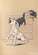 Cecil Aldin The White Puppy 1909 Art Repro Photo Print Picture No.2